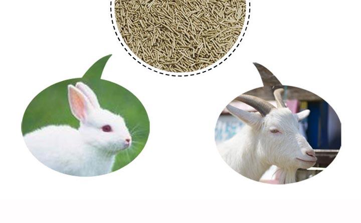 兔羊饲料颗粒
