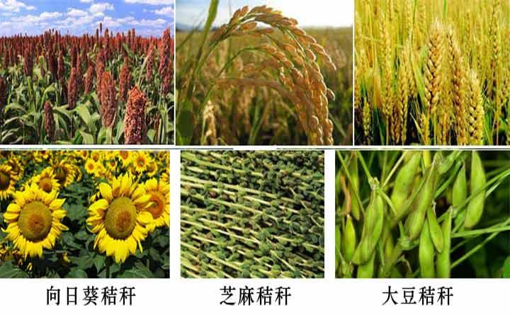 农作物秸秆图