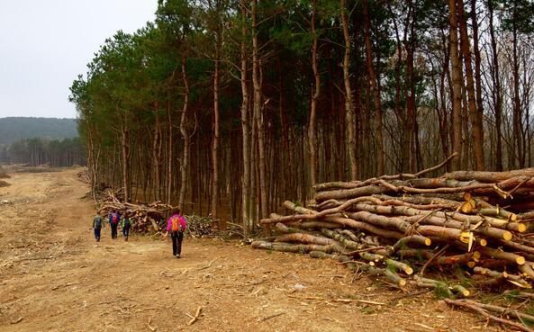 农林废弃物树枝树干